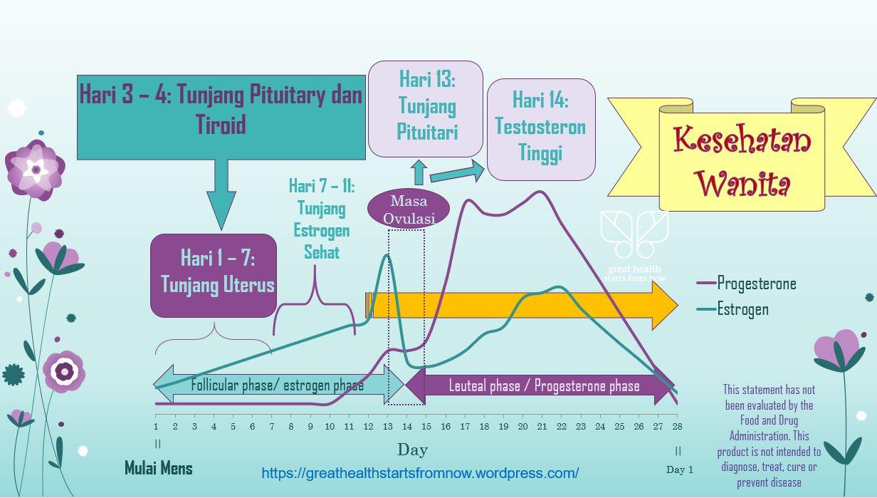 hormonal cewe umum.JPG